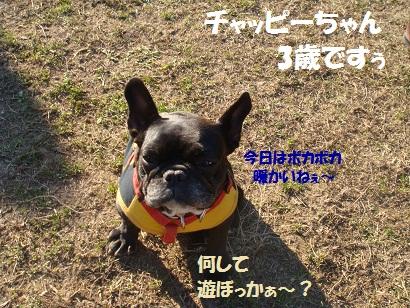 DSC06726 - コピー