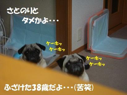 DSC01501 - コピー