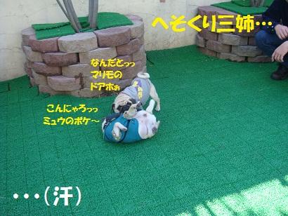 DSC08166 - コピー