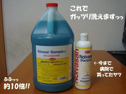 DSC02615 - コピー