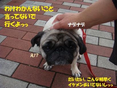 DSC02921 - コピー