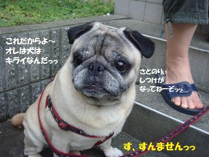 DSC02989 - コピー