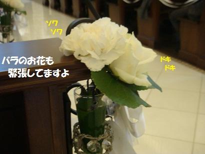 DSC03357 - コピー