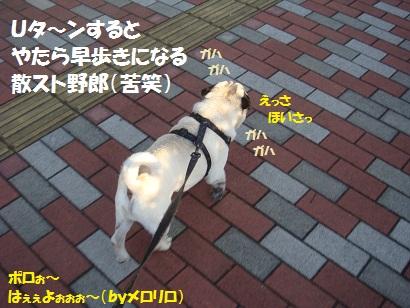 DSC04201 - コピー
