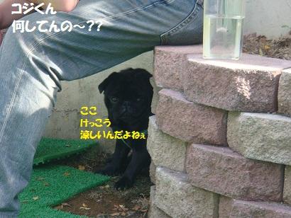 DSC01330 - コピー