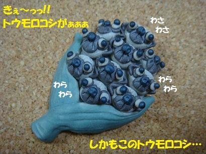 DSC07573 - コピー
