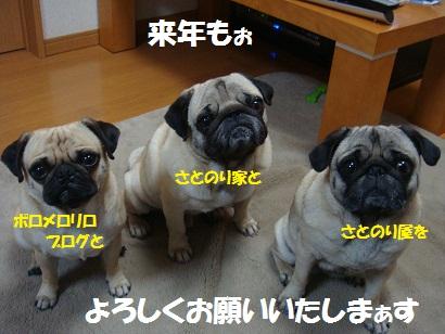 DSC00812_20101231215108.jpg