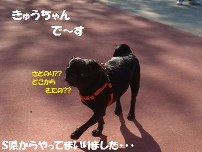 DSC00865.jpg