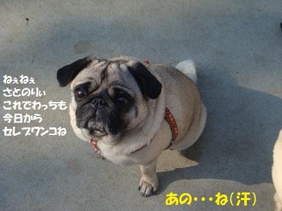 DSC00875.jpg