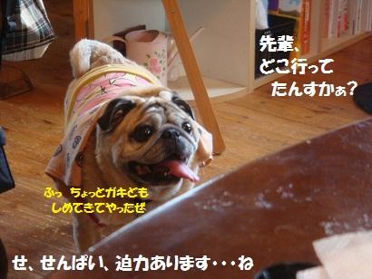 DSC00926_20110124214945.jpg