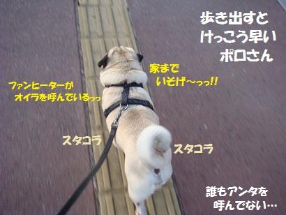 DSC01099_20110112224337.jpg