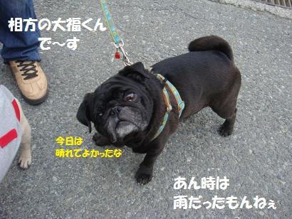 DSC01681.jpg