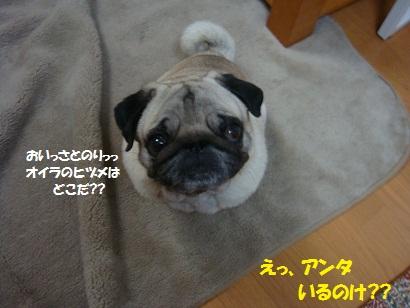 DSC02141_20110131214649.jpg