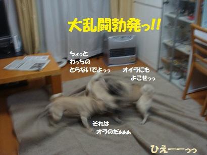 DSC02177_20110131214649.jpg