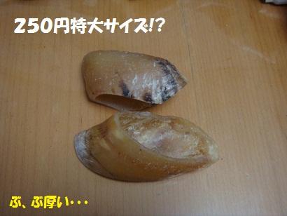 DSC02182_20110131214701.jpg