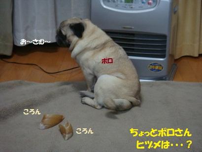 DSC02198_20110131221049.jpg