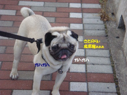 DSC02357_20101216010732.jpg