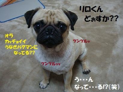 DSC02638.jpg