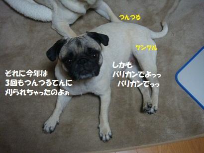 DSC03314.jpg
