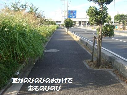 DSC04223.jpg