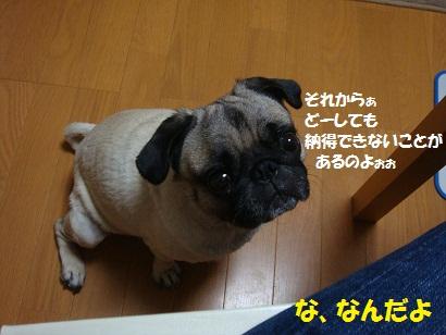 DSC04649.jpg