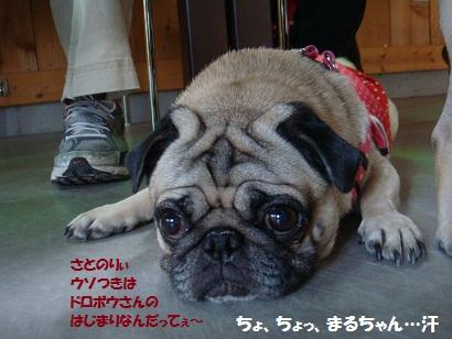 DSC06081.jpg