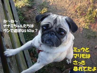 DSC06203.jpg