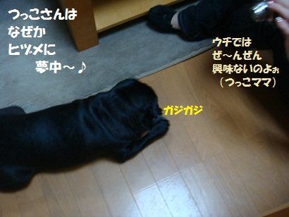 DSC06617_20110131222526.jpg