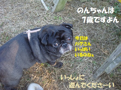 DSC06757.jpg