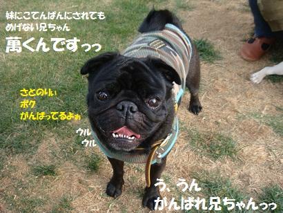DSC07088_20110115051608.jpg