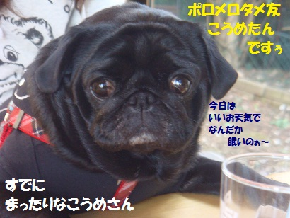 DSC07335.jpg