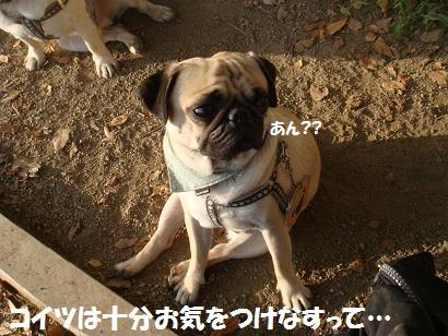 DSC07510.jpg