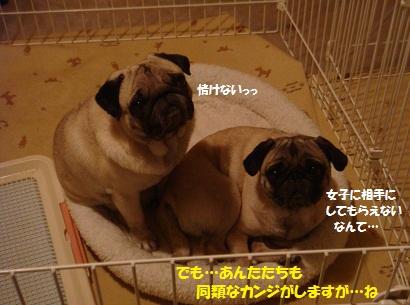 DSC08363_20101220213642.jpg