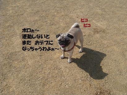 DSC08479.jpg