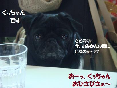 DSC08622.jpg