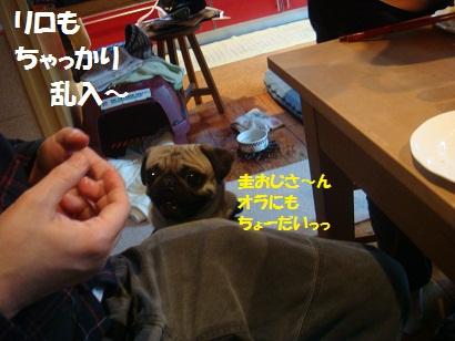 DSC09250.jpg