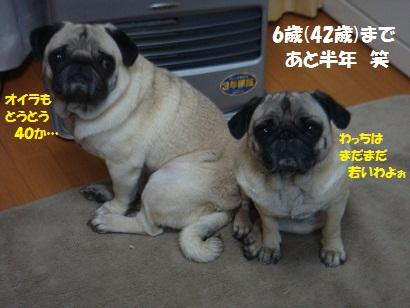 DSC09538_20101216004538.jpg