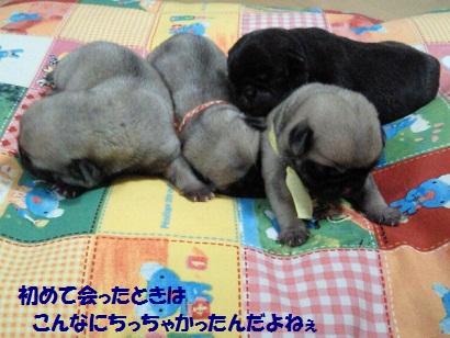 NEC_0008_20110115232357.jpg