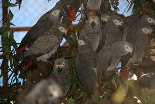 parrots now (2)