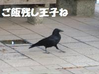 006_convert_20101023201453.jpg