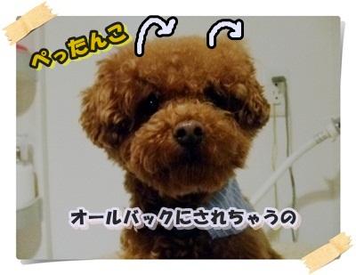 014_20110122.jpg