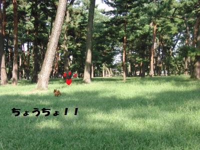 039_convert_20100909171329.jpg