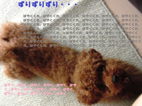 089_convert_20100725161501.jpg