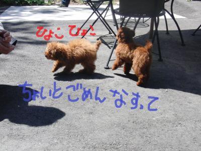 121_convert_20100514104243.jpg