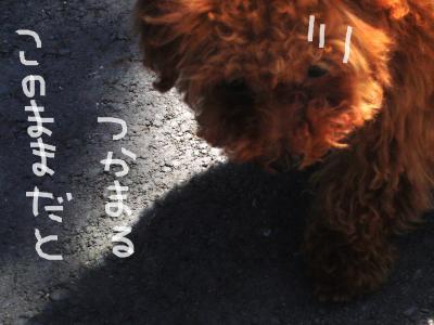1303_convert_20100513185900.jpg