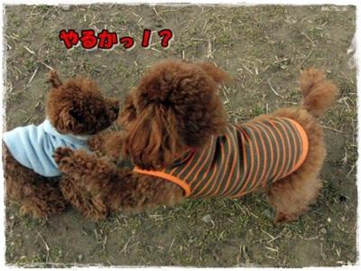 20110131-CIMG7989.jpg