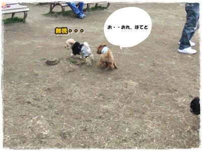 20110131-CIMG8250.jpg