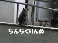 272_convert_20101022185047.jpg
