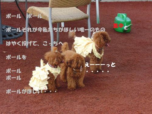 610_convert_20100822145724.jpg
