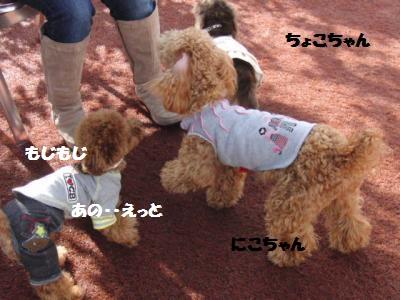 CIMG0119_convert_20110106102659.jpg